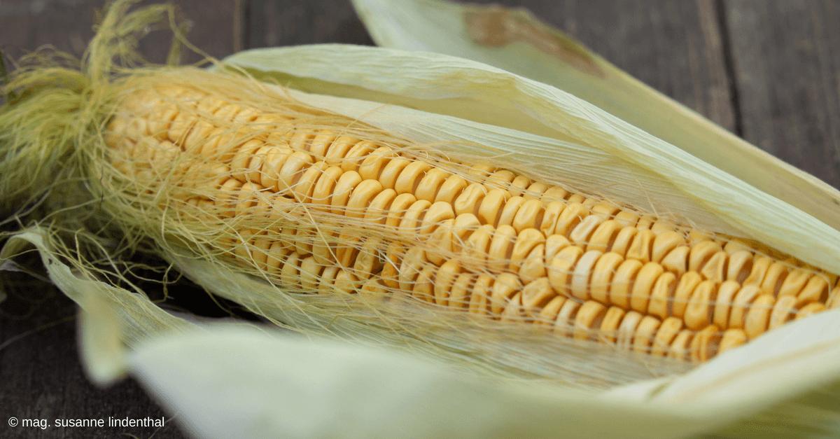 Kukuruz Mais