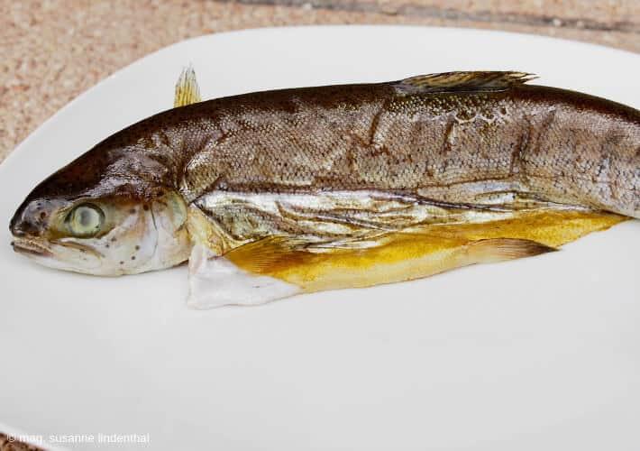 Fisch-selbst-räuchern-Forelle