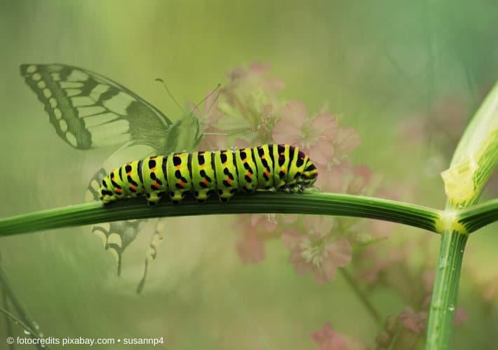 Mit dem Besten aus zwei Welten in die Wechseljahre am Beispiel Raupe und Schmetterling