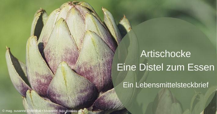 Artischocke-eine-Distel-zum-Essen-Titel